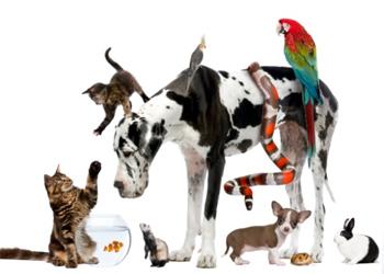 Alle dyr Hvilke hus- / kæle- dyr passer I? Hvilke hus- / kæle- dyr passer I? all pets