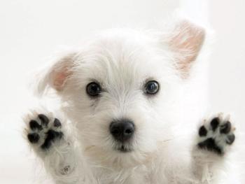 Image Description priser Priser very cute dog 350x263