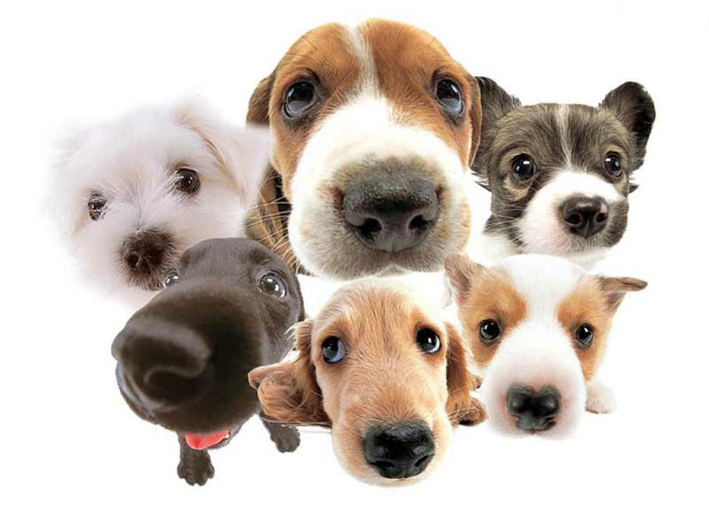 Nyheder Nyheder a lot of dogs dogs