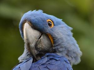 Anbefalinger Anbefalinger parrot closeup 300x225
